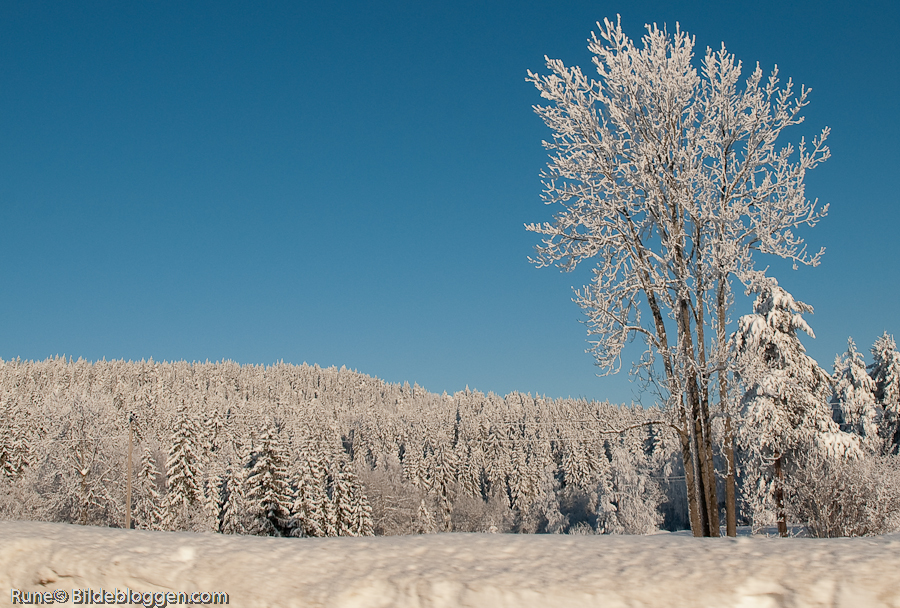 vinterfebr09-1