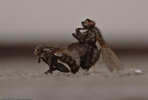 2 fluer i ett smekk