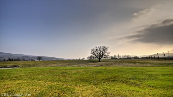 Alene står treet i Sande og venter på en ny vår.